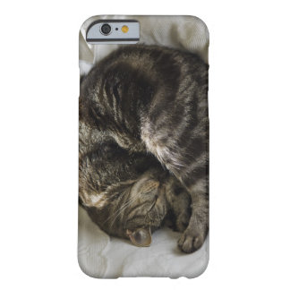Sleeping cat barely there iPhone 6 case