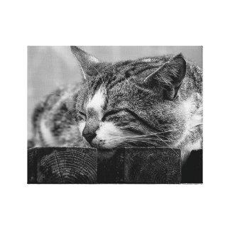 Sleeping Cat Canvas Print