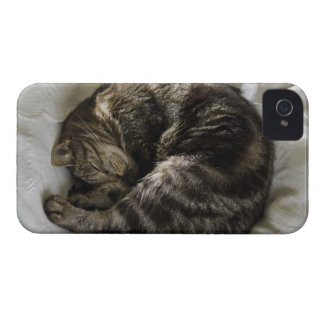 Sleeping cat iPhone 4 Case-Mate case