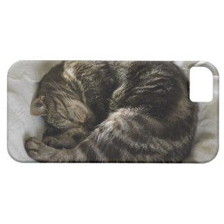 Sleeping cat iPhone 5 case
