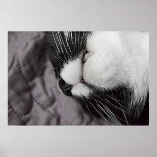 sleeping cat nose upside down kitty print