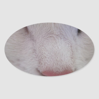 Sleeping Cat Oval Sticker