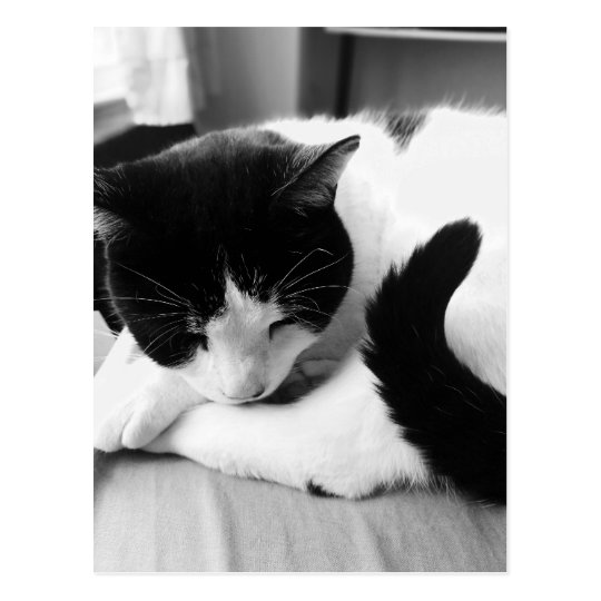 Sleeping Cat Photo Postcard