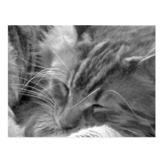 sleeping cat postcard