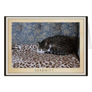 Sleeping Cat - Serenity Card