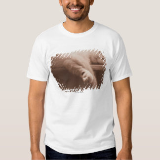 Sleeping Cat T Shirt