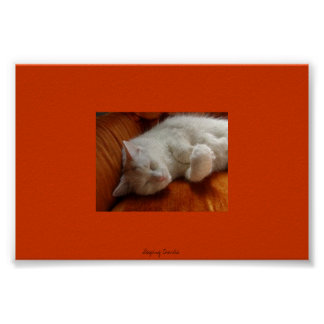 Sleeping Charlie Poster