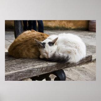 Sleeping Cretan Cats Poster