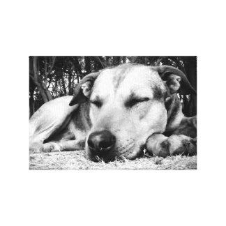 Sleeping Dog Canvas Print