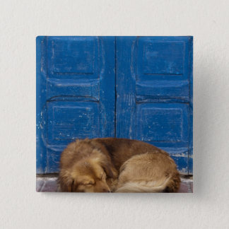 Sleeping dog, Essaouira, Morocco 15 Cm Square Badge