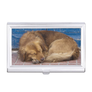 Sleeping dog, Essaouira, Morocco Business Card Holder