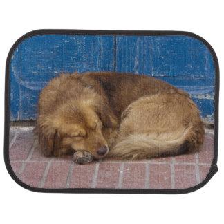Sleeping dog, Essaouira, Morocco Car Mat