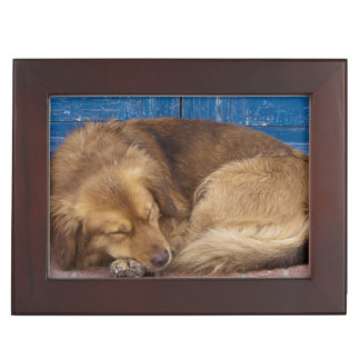 Sleeping dog, Essaouira, Morocco Keepsake Box