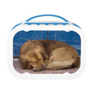 Sleeping dog, Essaouira, Morocco Lunch Box