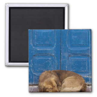 Sleeping dog, Essaouira, Morocco Magnet