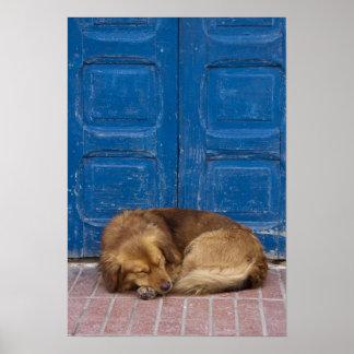 Sleeping dog, Essaouira, Morocco Poster
