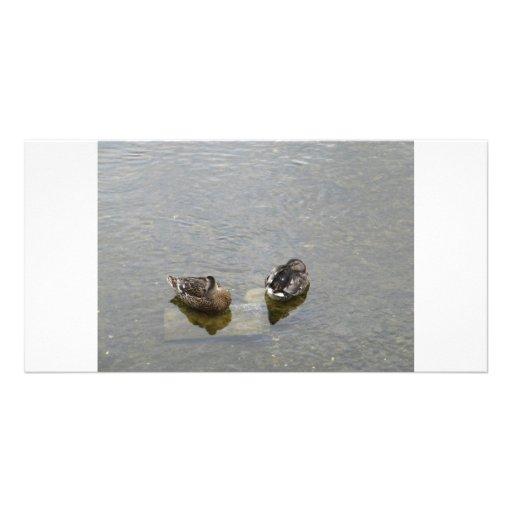 Sleeping Ducks Photo Card