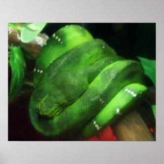 Sleeping Emerald Tree Boa Poster