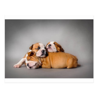 Sleeping English bulldog Postcard