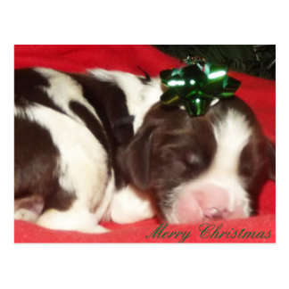 Sleeping English Springer Spaniel Christmas Puppy Postcard