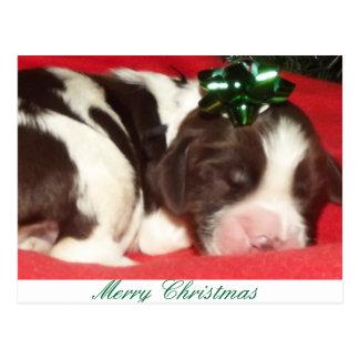 Sleeping English Springr Spaniel Christmas puppy Postcard