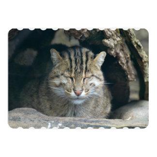 Sleeping Fishing Cat 13 Cm X 18 Cm Invitation Card