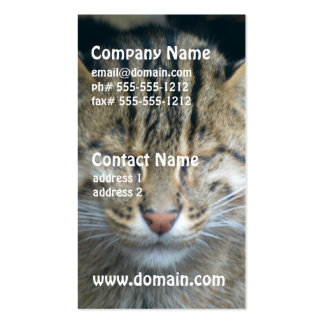 Sleeping Fishing Cat Business Card Templates