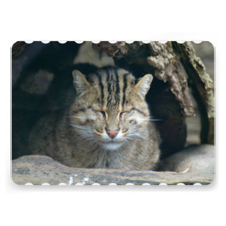 Sleeping Fishing Cat Personalized Invitations