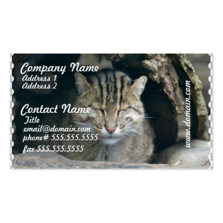 Sleeping Fishing Cat Pack Of Standard Business Cards