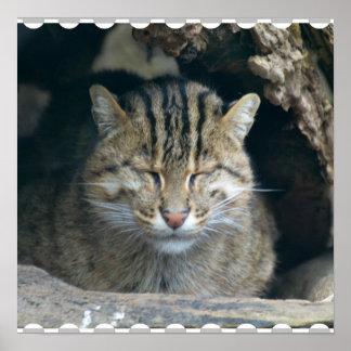 Sleeping Fishing Cat Poster