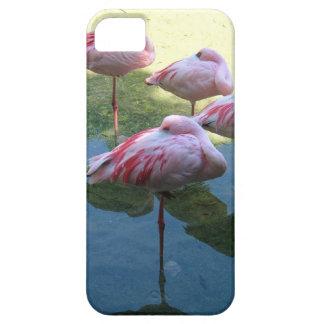 Sleeping Flamingos iPhone 5 Cover
