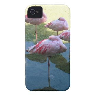 Sleeping Flamingos Case-Mate iPhone 4 Cases