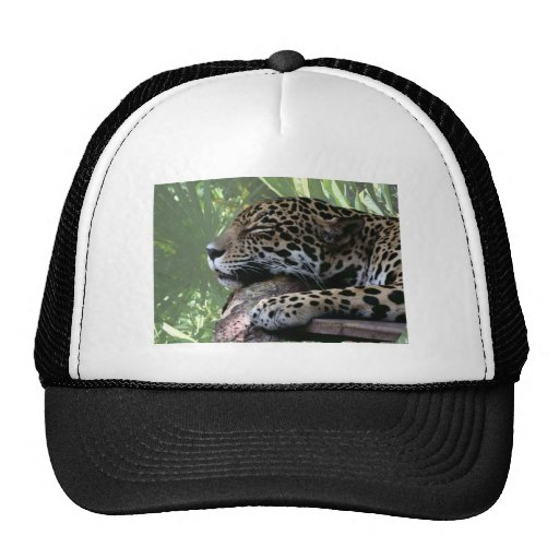 Sleeping Florida jaguar , light green frond back Hats