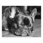 Sleeping French Bulldog Photo Print