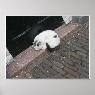 Sleeping Front Door Cat Poster