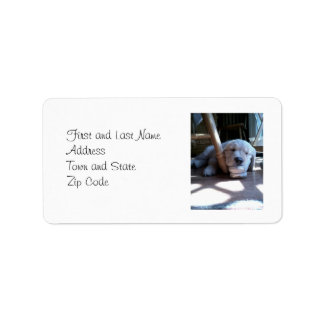 Sleeping Golden Retriever Puppy Label