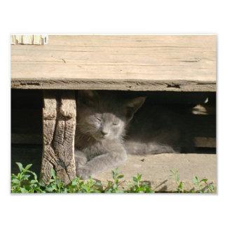 Sleeping Gray Kitten Photo Art