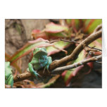 Sleeping green frog colour photograph card