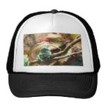 Sleeping green frog colour photograph trucker hat