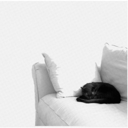 Sleeping Grey Cat on White Sofa Photo Sculptures