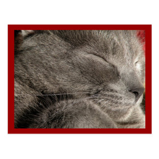 Sleeping grey cat postcard