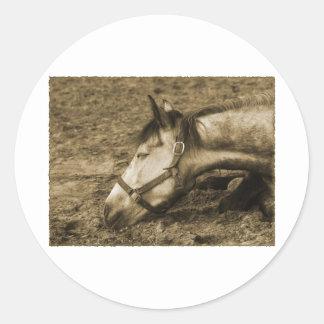 SLEEPING HORSE ROUND STICKER