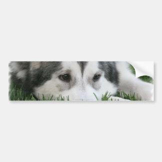Sleeping Husky Bumper Stickers