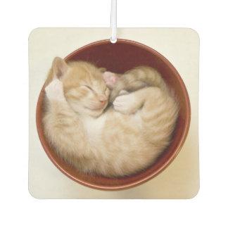 Sleeping Kitten Car Air Freshener