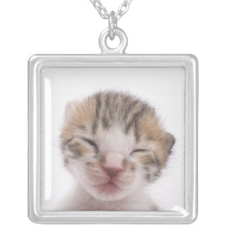 Sleeping kitten, close-up of head silver plated necklace