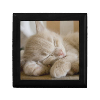 Sleeping Kitten Gift Box