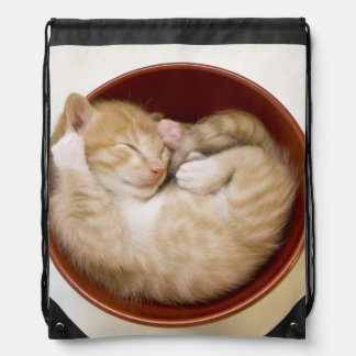 Sleeping kitten in simple red bowl on white drawstring bag