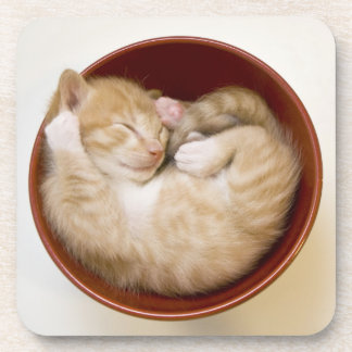 Sleeping kitten in simple red bowl on white drink coasters