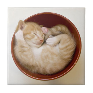Sleeping kitten in simple red bowl on white small square tile