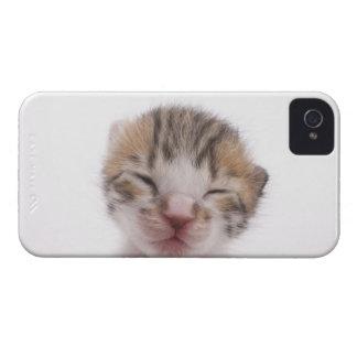 Sleeping kitten iPhone 4 Case-Mate cases